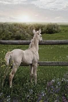 foal in field