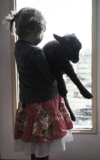 little girl holding lamb