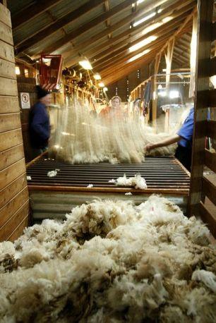 sorting wool 2