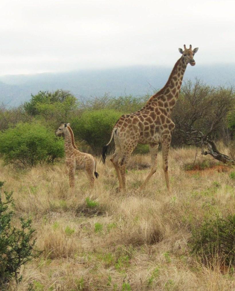 namibia-jan-2012-069