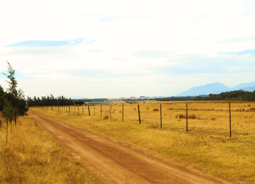 up-the-road-to-littlevlei-010