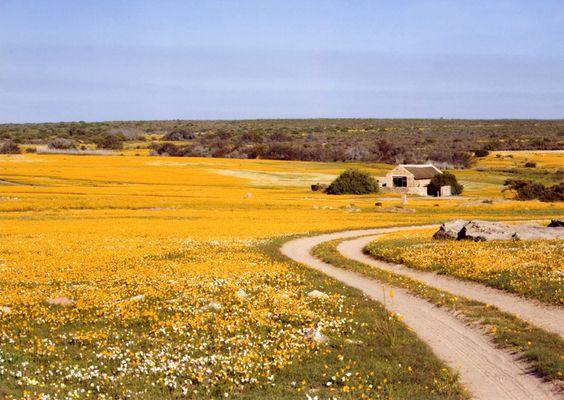 veld-flowers