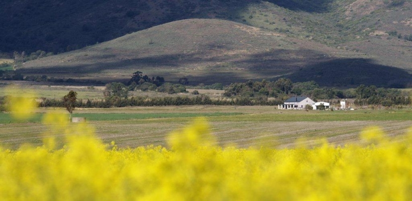 littlevlei-and-neighbouring-canola-fields-2012-2