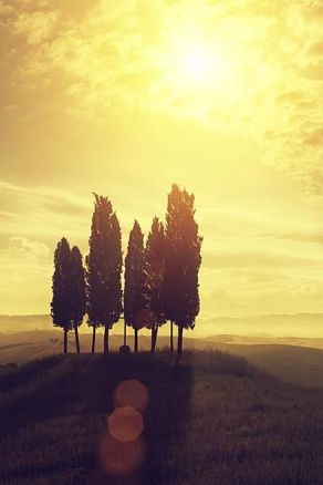 trees-in-sunrise
