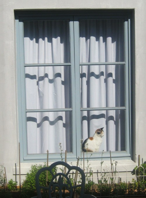 Kitz in Benjamin's courtyard window Oct 2011