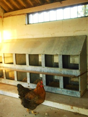 Chicken house 013