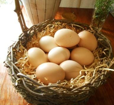 eggs 013