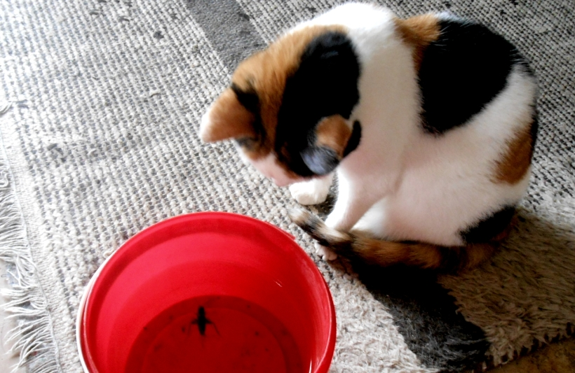 Kitzwallace and a cricket